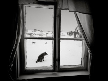 7 Dog in a window, Sermiliqaq, East Greenland 1997