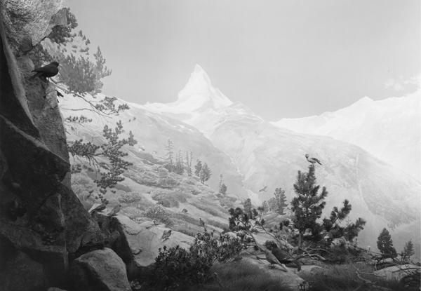 Hiroshi Sugimoto Still Life Pace Gallery London Thirteen Large Format Photographs