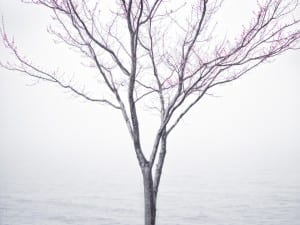 Cig Harvey. Spring Tree in Fog, Lincolnville, Maine, 2012.