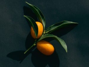 Amy Harrity, Kumquat, 2015.