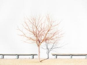 J Bennett Fitts, Tree with Two Benches. From the series Industrial Landscap[ing].