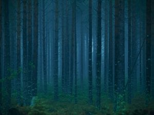 Isabella Ståhl, <i>Blue Forest</i>, from the series <i>In the Shadow of Dusk.</i> www.isabellastahl.com
