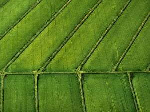 <I>Rice Fields, Davis, CA</I>, 2003. Ref. #:LS_8320_28. © Alex MacLean.