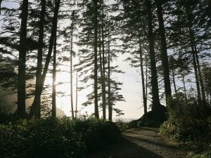Whitney Hayes, <I>A late day image taken in Ecola State Park, Oregon</I>. Courtesy of the artist.